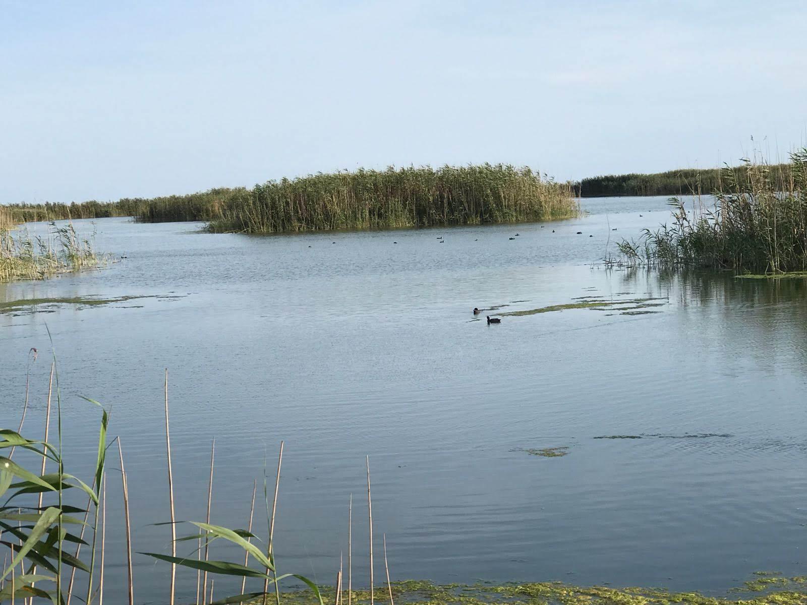 la bellezza del Parco Naturale Regionale, sul litorale di Ugento nel Salento