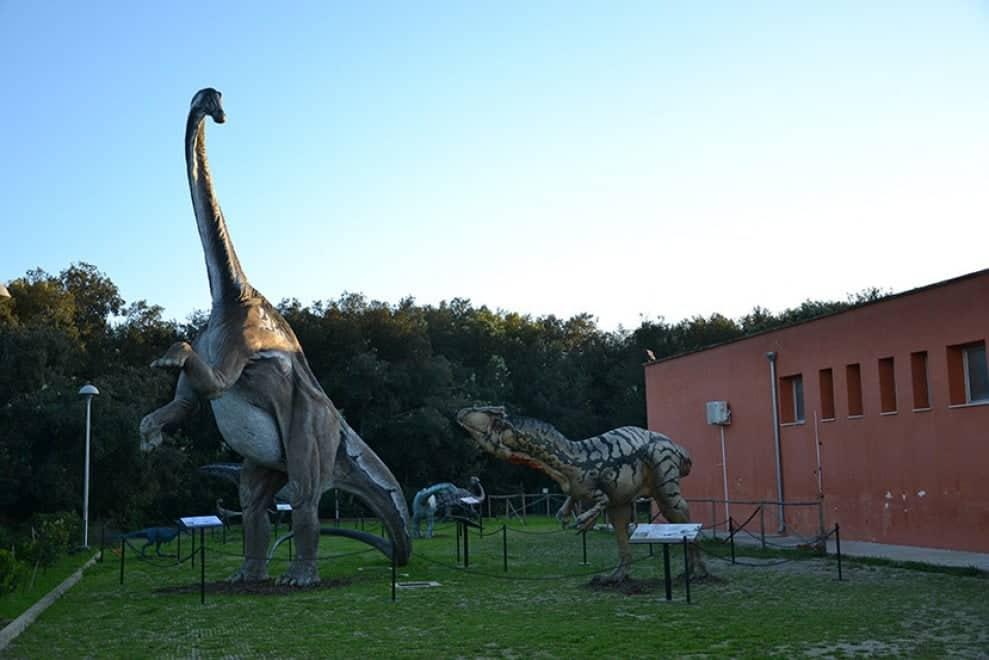 il museo di storia naturale a Calimera nel Salento