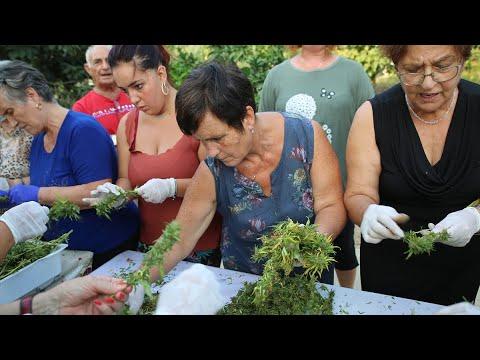 Trimmatura salentina: le ex tabacchine cantano lavorando la canapa